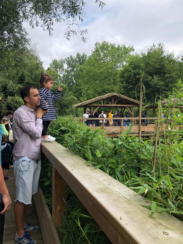 zoo_beauval_niños (1)
