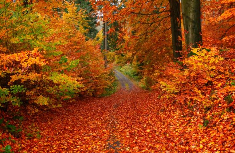 Herbstimpressionen in Sachsen