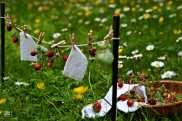 """hang up the laundry"" | Erdbeer-Wäscheleine"