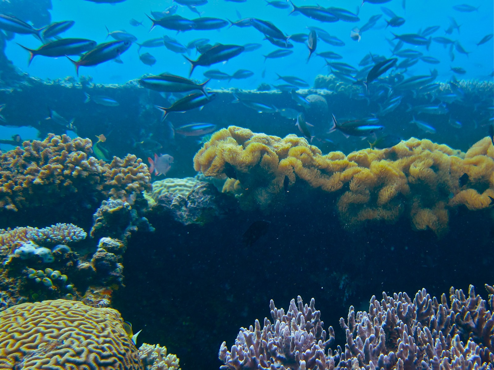 How Can Indonesia S Coral Reefs Resist Climate Change
