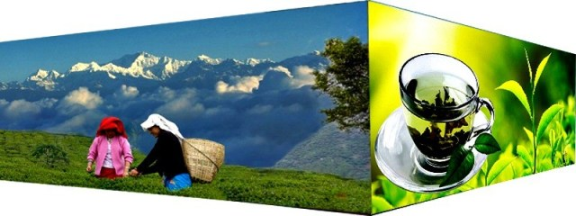 Nepal Mission HIMET-green-tea-from-high-altitude HOME