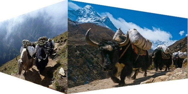 Nepal Mission Yaks-are-helping-as-poters MOUNTAIN RELATED FAQS