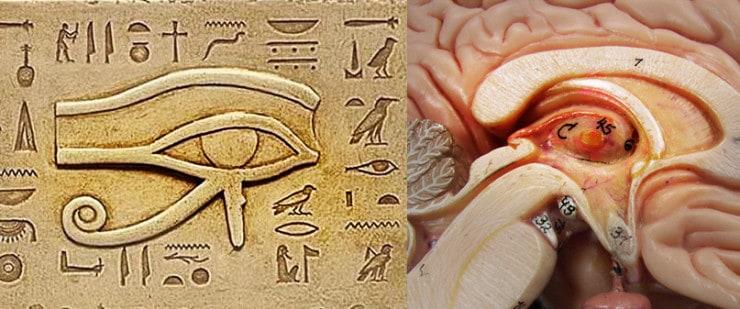 5 secrets pour activer votre glande pinéale: votre troisième oeil