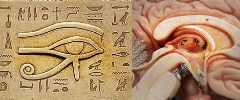 glande pineale et Egypte