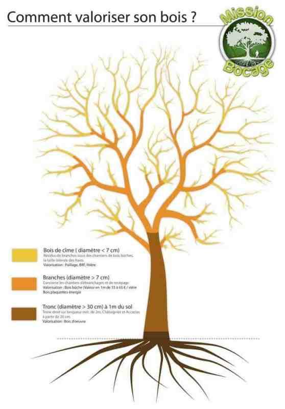 Schéma de la valorisation d'un arbre. Source : Mission Bocage - 2012