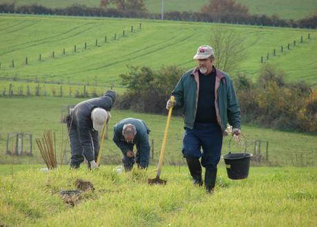 agroforesterie plantation