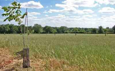 26 projets agroforestiers en panne de financements en Anjou