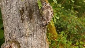 gestion bois bord route