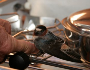 20. Jeff asked the bird to hop on his finger to go outside.
