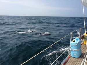 44. Dolphins entertained Joyful's crew.