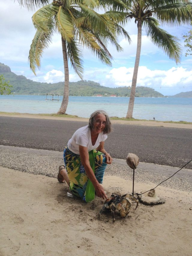 30. Anne is with C.T. the flambouyant 15 year old coconut crab.  C.T. is eating a coconut with his huge claws. Coconut crabs used to be everywhere in Bora Bora.  Now they bring them in from other islands in Polynesia to sell to the locals for food.