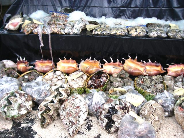 97. Delicacies from the sea abounded in the show. Sea creatures were shipped in overnight by Tongans who wished to participate in the show. After the judges came by, everything was sold or taken home to eat