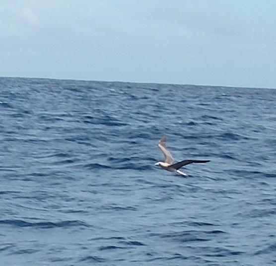 22-this-sea-bird-liked-the-way-joyful-helped-stir-up-fish