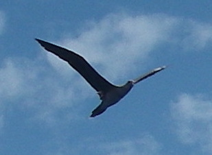 23-this-sea-bird-flew-around-joyful-for-around-an-hour-sometimes-they-would-turn-their-heads-and-take-a-really-good-look-at-us