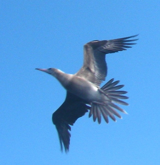 25-this-beautiful-seabird-tried-to-land-on-top-of-joyfuls-hydrovane-steering-system-for-at-least-an-hour