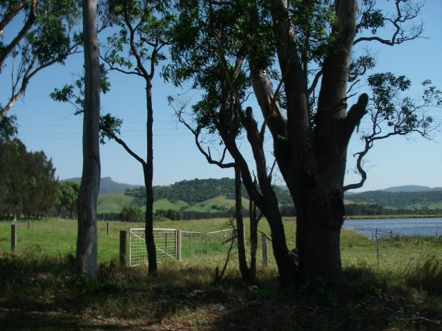 113.1. Peaceful farmland in Berry, New South Wales, Australia. Kangaroos live in here, but are not well liked by most farmers because they compete with sheep and cattle for the deliciou