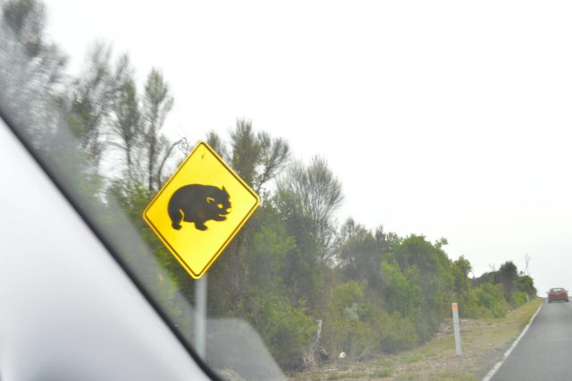 134.8. On the way to Wilson's Promatory in Victoria, Australia, we saw a roadside sign warning drivers to watch out for Tasmanian Devils crossing the road.