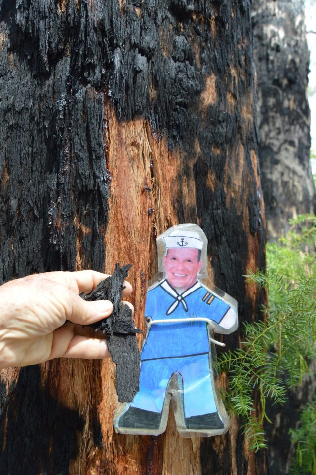 145. Flat Mr. Davis found a tree in the forest which had been burned by the government in hopes of preventing forest fires and creating healthier trees