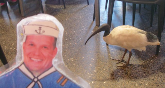 55. Birds - Flat Mr. Davis saw a wild ibis in a cafe in Sydney, Australia, November 2015