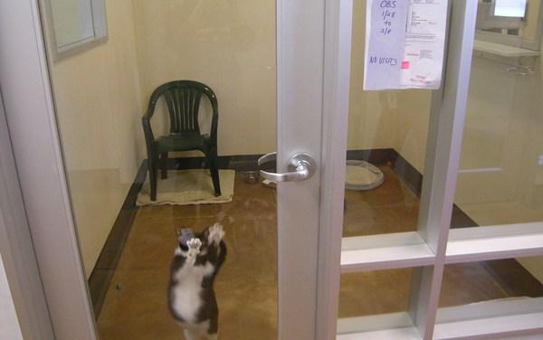 Pet Adoptions Up at SPCA, But Fail to Impress Critics