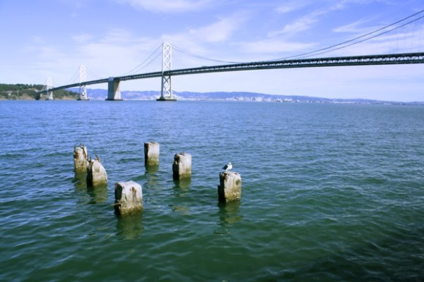 Come back to the San Francisco Marina to enjoy more sights of the Bay Area including the Bay Bridge