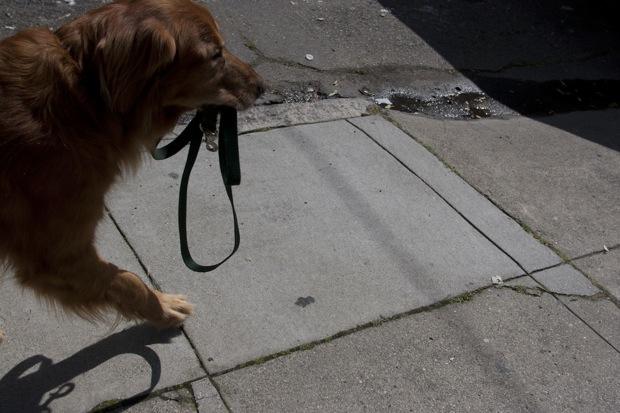 Information About Service Dog Registration