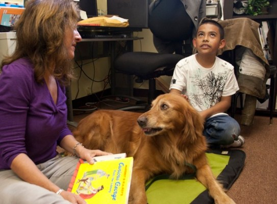 Internal summary: Therapy dogs Essay