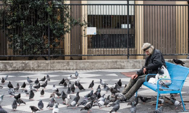 The Swan Who Feeds and Cares for SF's Pigeons