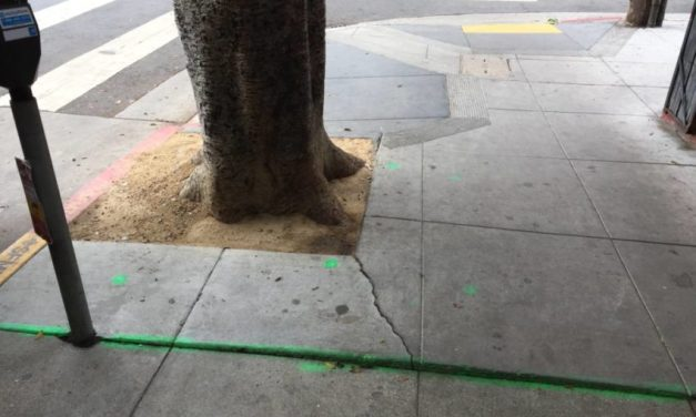 Ticking Tree Bomb: Ficus trees damage storefronts, create pedestrian hazards on 24th Street