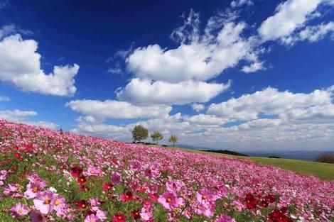 環境変化に振り回されない平和な心の保ち方