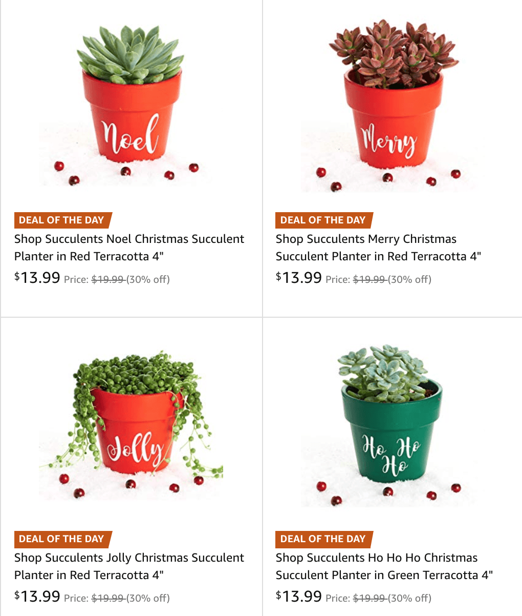 Christmas Succulent Planters.Mission To Save Helping You Save Give And Live