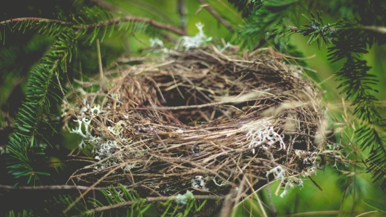 Making the Empty Nest Prime Time