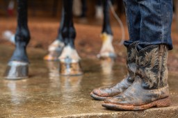 Kam Moore, 15, wears cowboy boots as he cleans his family's horse before a race during the harness racing competition at the Neshoba County Fair in Philadelphia, Miss. Tuesday, July 31, 2018.