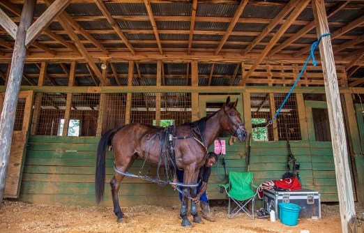 Antonio Ficklin, of Carthage, Miss., gets his horse ready for the next harness race competition during the Neshoba County Fair in Philadelphia, Miss. Tuesday, July 31, 2018.