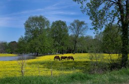 Horses wander through a pasture April 9, 2020 in Issaquena County, Mississippi.