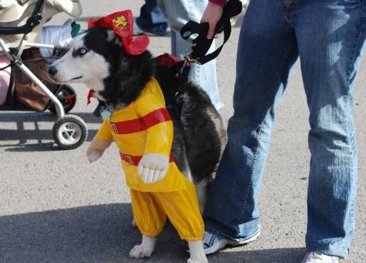Soulard Mardi Gras pet parade