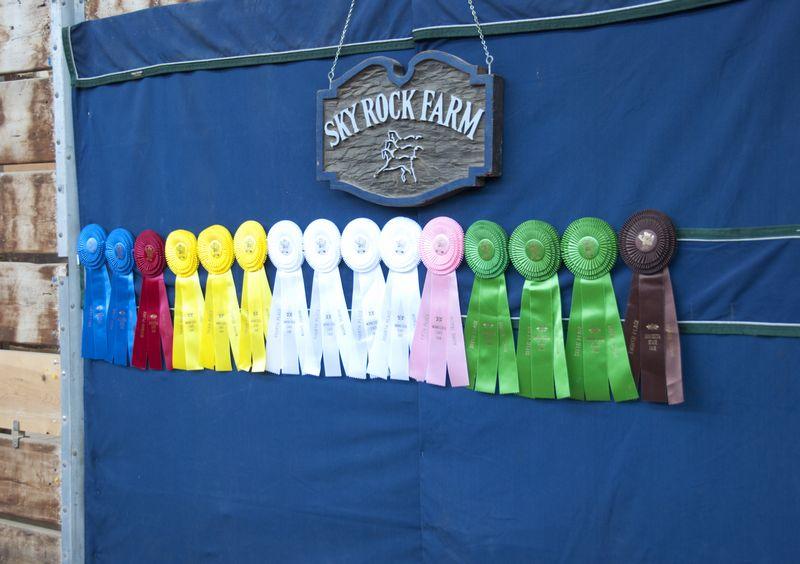 Minnesota State Fair; St. Paul, MN