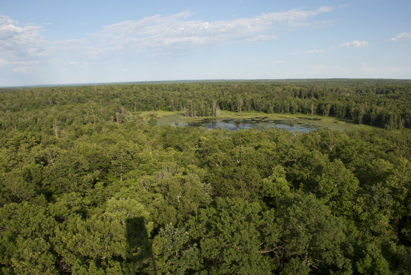 Fire tower view at Itasca State Park (MN)