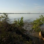 On the Mississippi at Fancy Point Towhead (LA)