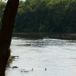 Canoeing the Mississippi River at Elk River