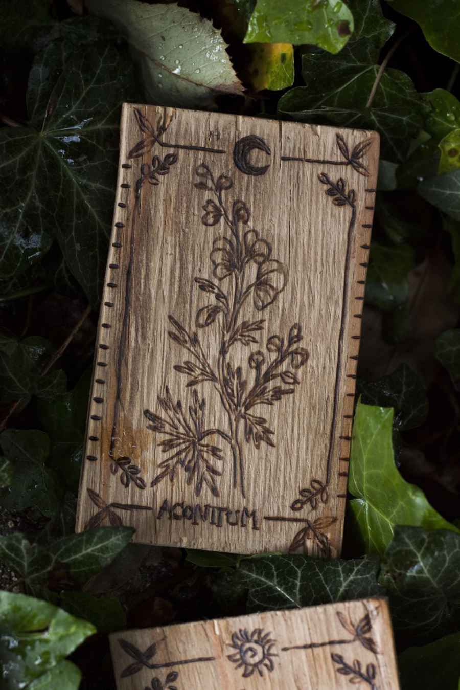 Décoration carte de tarot en bois inspirée des gravures anciennes botaniques de plantes, naturalisme, aconit napel, upcyclé, par l'atelier de la Lettre aux ours - Missive to Bears, artisanat écologique et français en Normandie