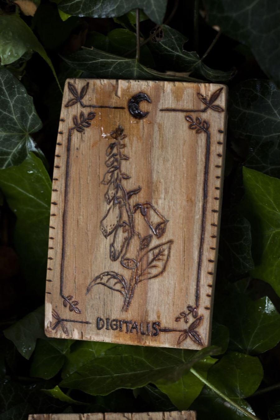 Décoration carte de tarot en bois inspirée des gravures anciennes botaniques de plantes, naturalisme, digitale, upcyclé, par l'atelier de la Lettre aux ours - Missive to Bears, artisanat écologique et français en Normandie