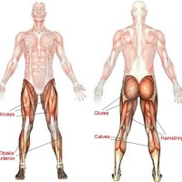 Stretching Tips ; Inner Thigh + (Iliotibial band) ITB