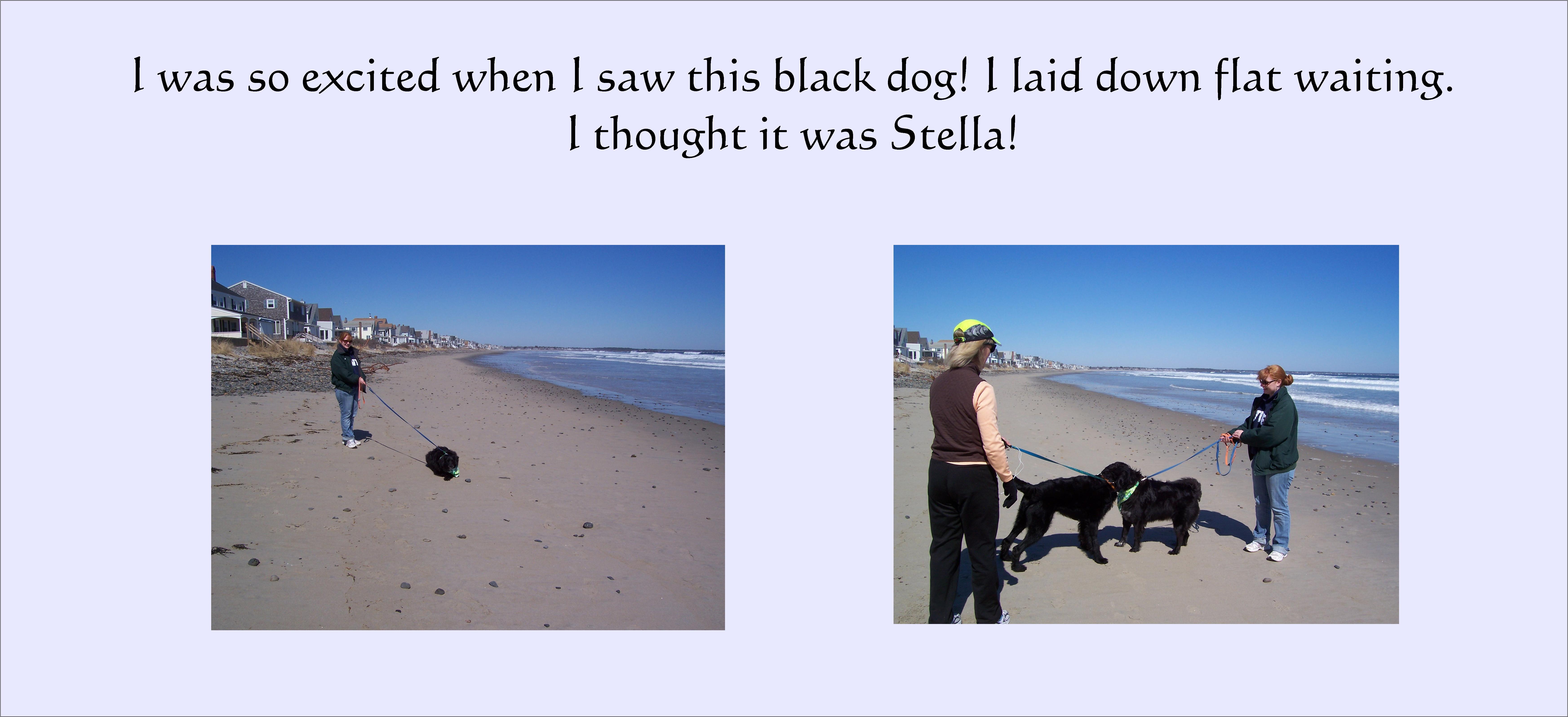 stella-slide-2