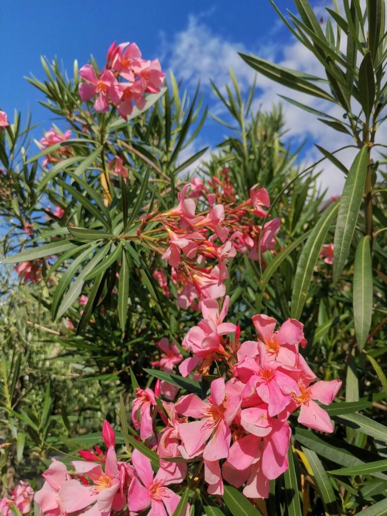Blühende Blumen im Garten
