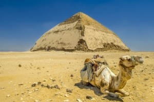 Camel in front of a pyramid