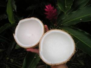 coconut split in half food to be beautiful