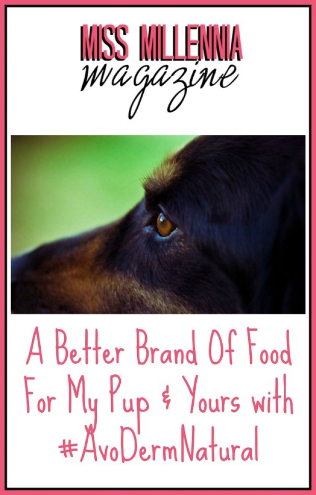 A Better Brand Of Food For My Pup