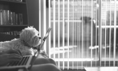 person with laptop and dog thinking about moving home