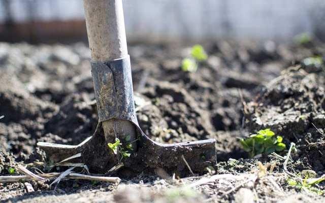 shovel in soil